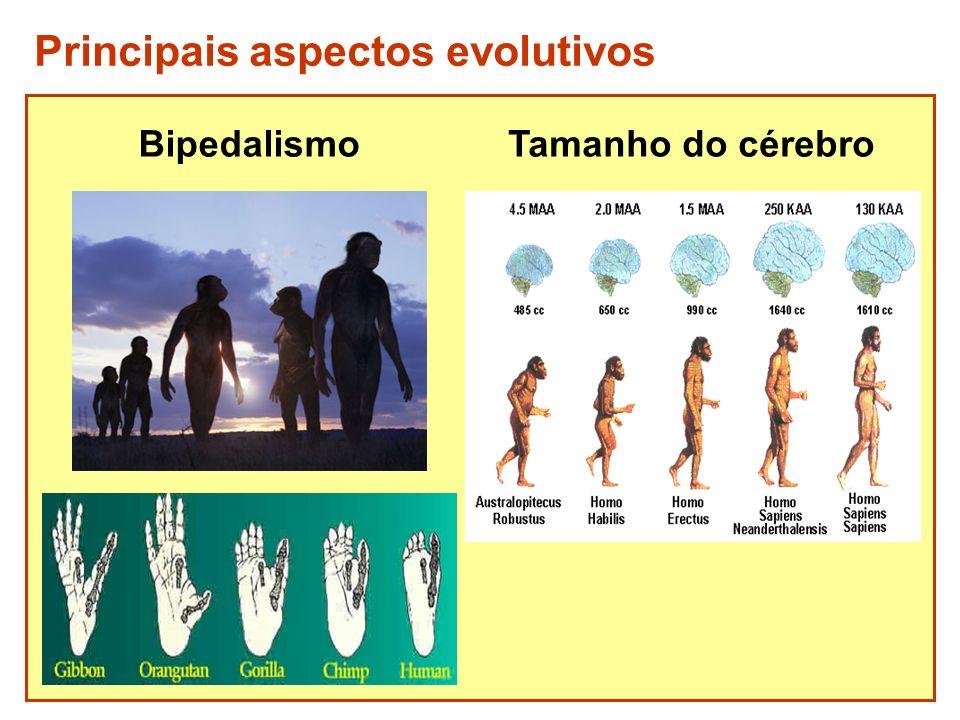 Principais aspectos evolutivos