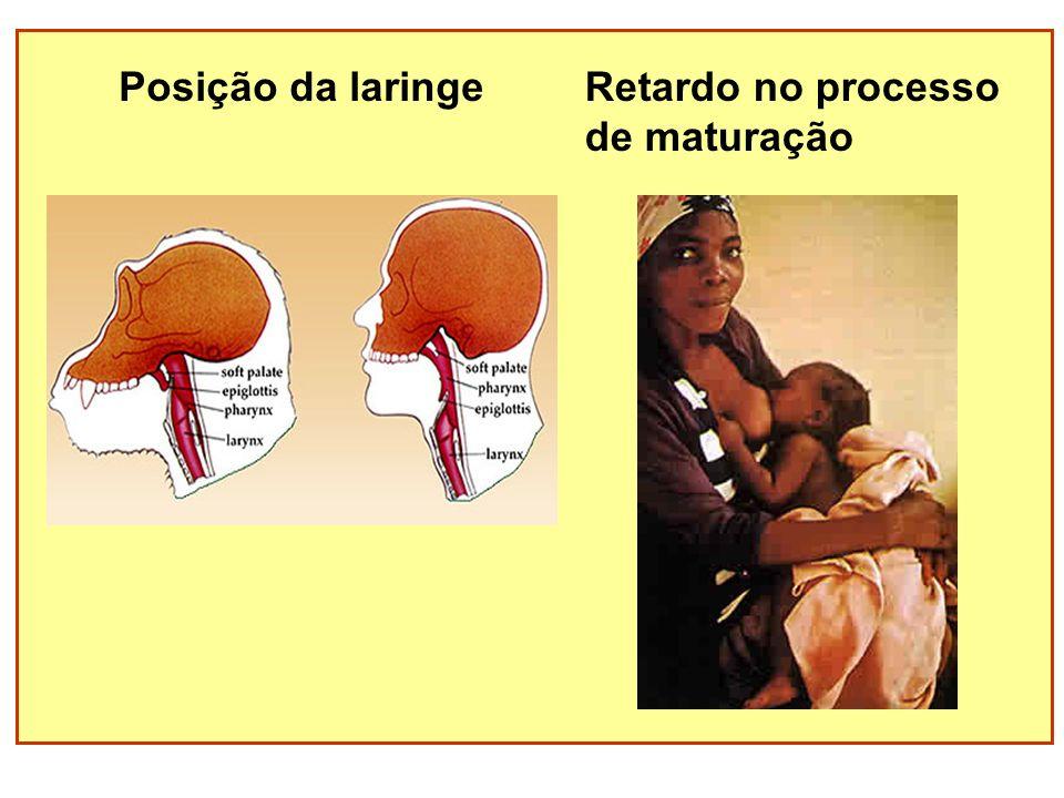 Posição da laringe Retardo no processo de maturação