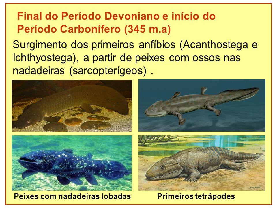 Final do Período Devoniano e início do Período Carbonífero (345 m.a)