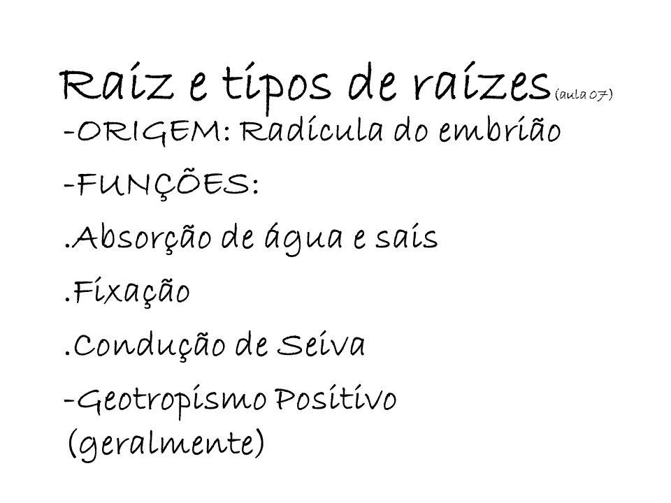 Raiz e tipos de raízes(aula 07)
