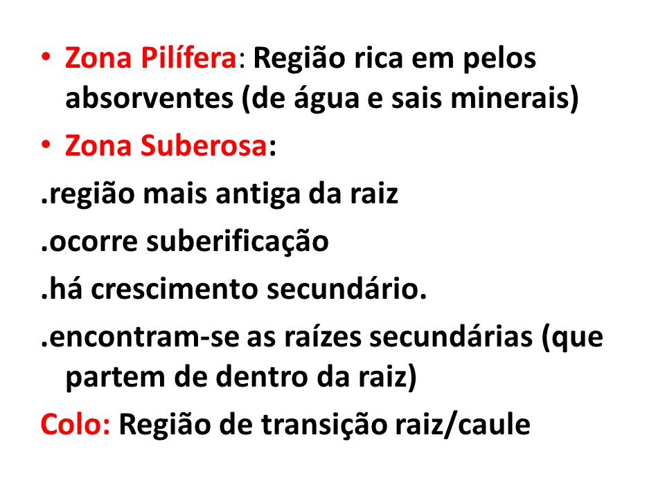 Zona Pilífera: Região rica em pelos absorventes (de água e sais minerais)
