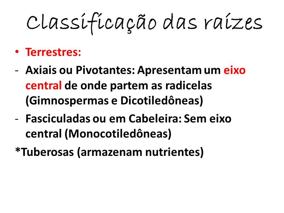 Classificação das raízes