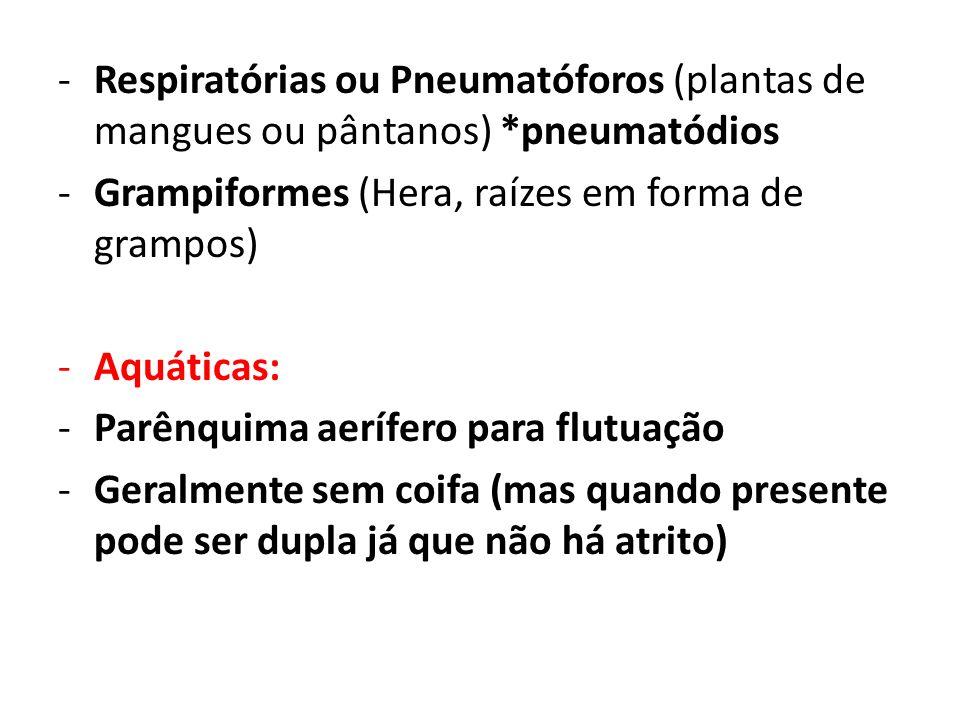 Respiratórias ou Pneumatóforos (plantas de mangues ou pântanos)
