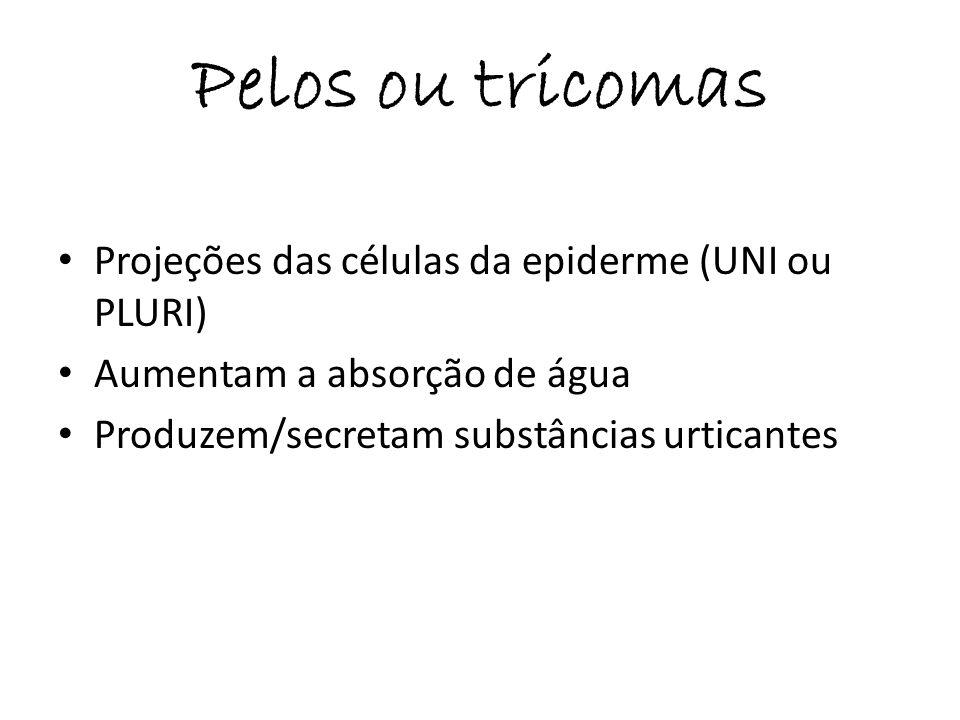 Pelos ou tricomas Projeções das células da epiderme (UNI ou PLURI)
