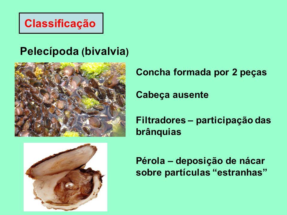 Pelecípoda (bivalvia)