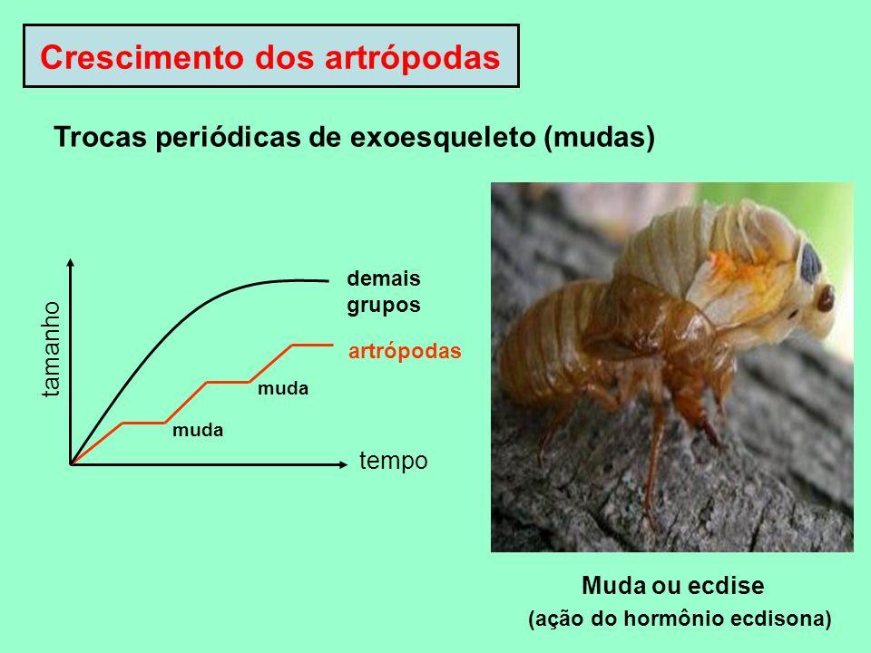 Crescimento dos artrópodas