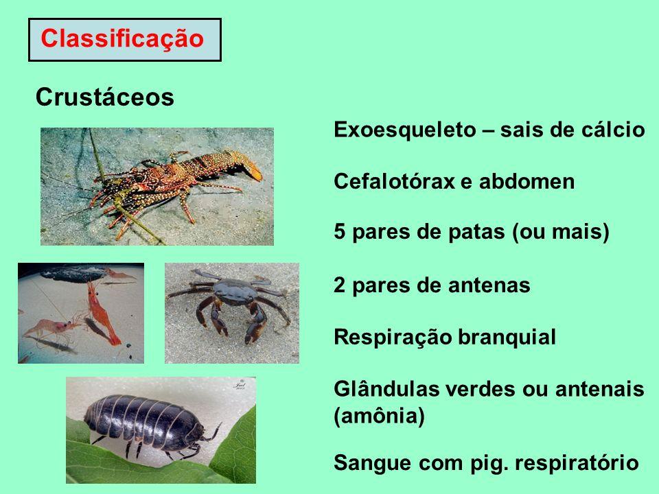 Classificação Crustáceos Exoesqueleto – sais de cálcio