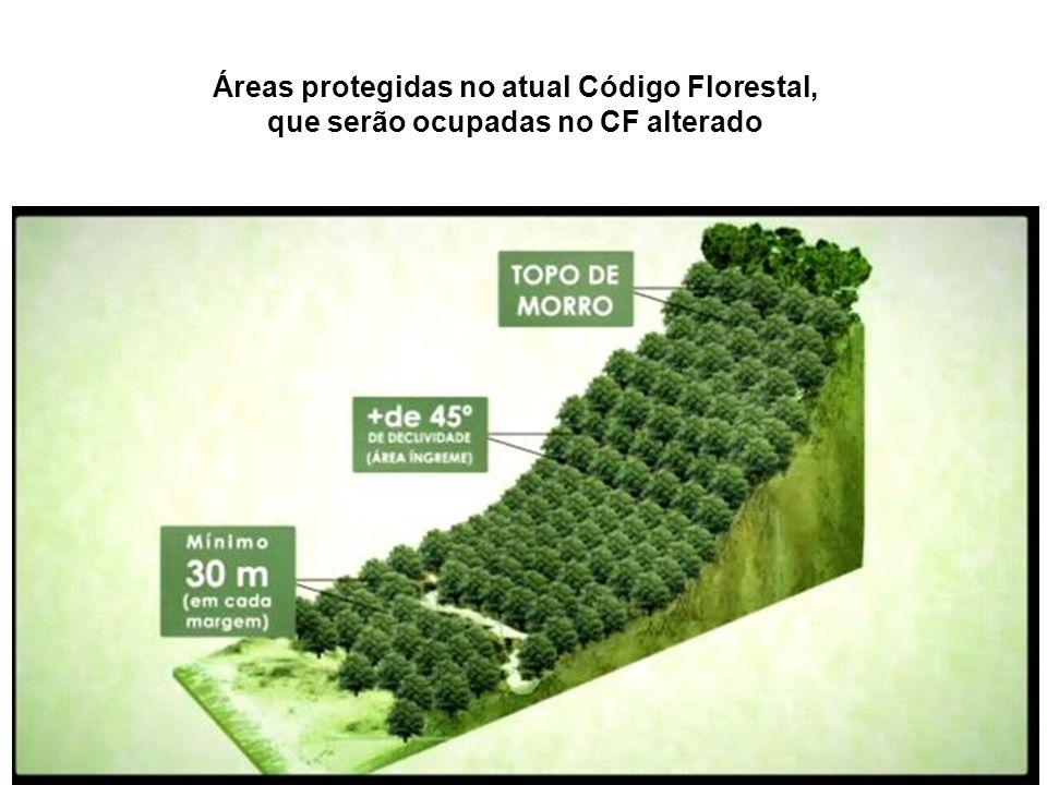 Áreas protegidas no atual Código Florestal,