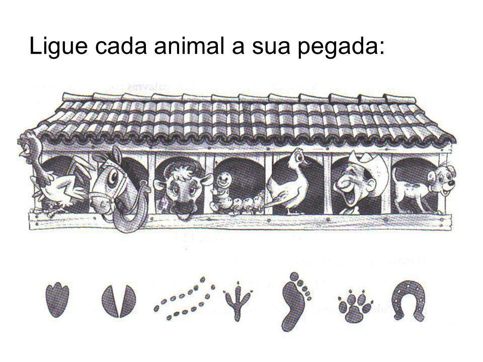 Ligue cada animal a sua pegada: