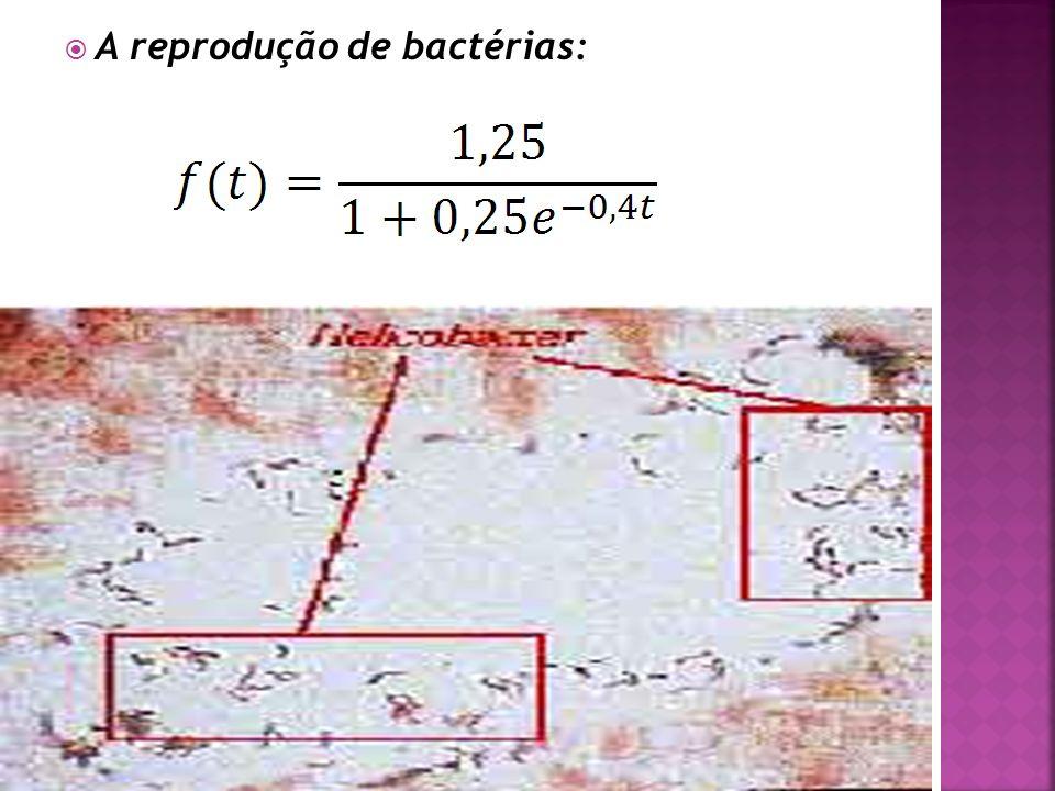 A reprodução de bactérias: