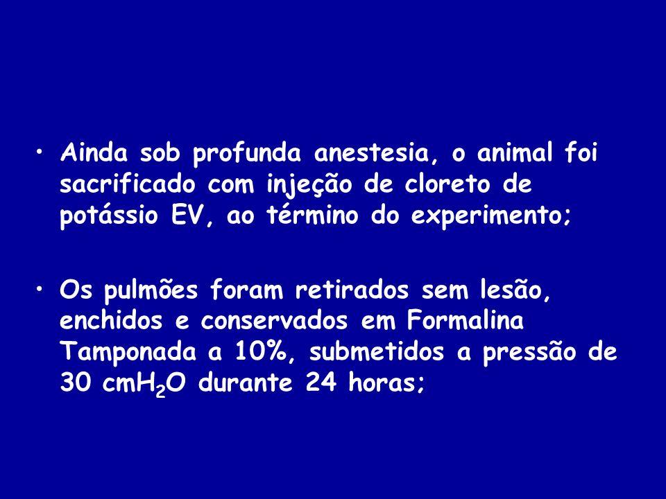 Ainda sob profunda anestesia, o animal foi sacrificado com injeção de cloreto de potássio EV, ao término do experimento;