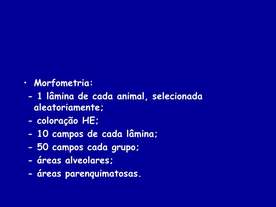 Morfometria: - 1 lâmina de cada animal, selecionada aleatoriamente; - coloração HE; - 10 campos de cada lâmina;