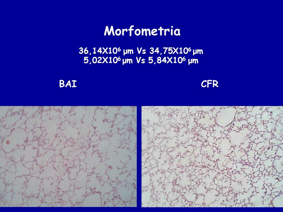 Morfometria BAI CFR 36,14X106 μm Vs 34,75X106 μm