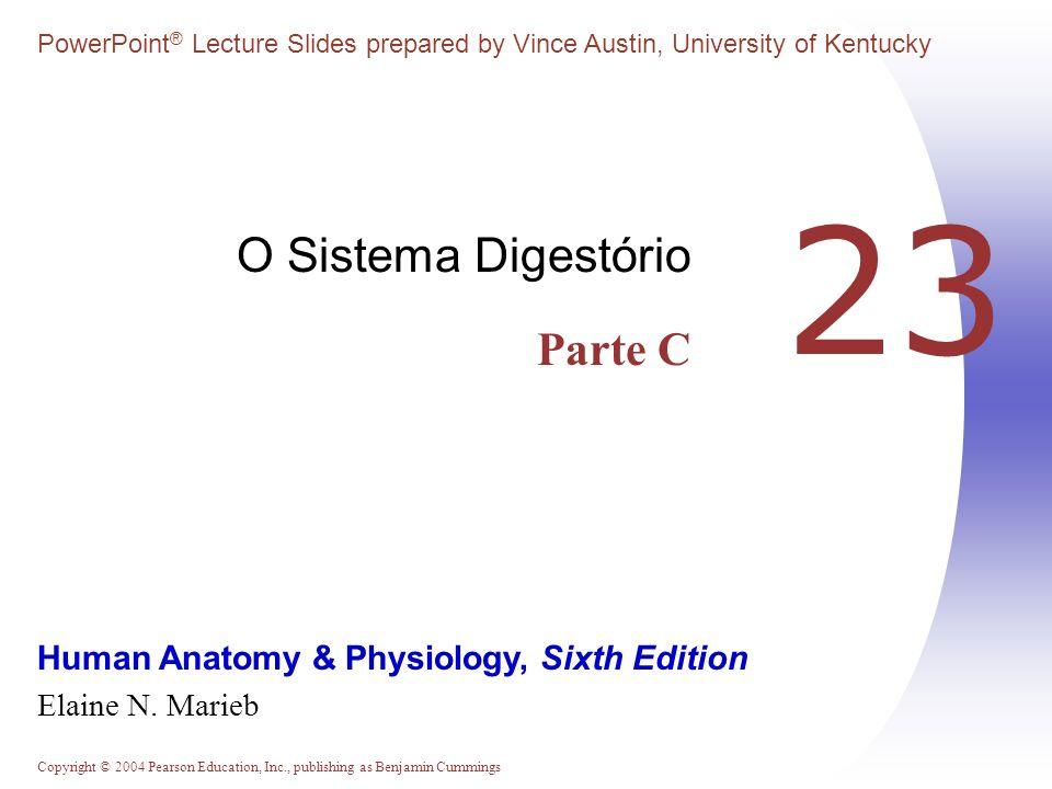 O Sistema Digestório Parte C