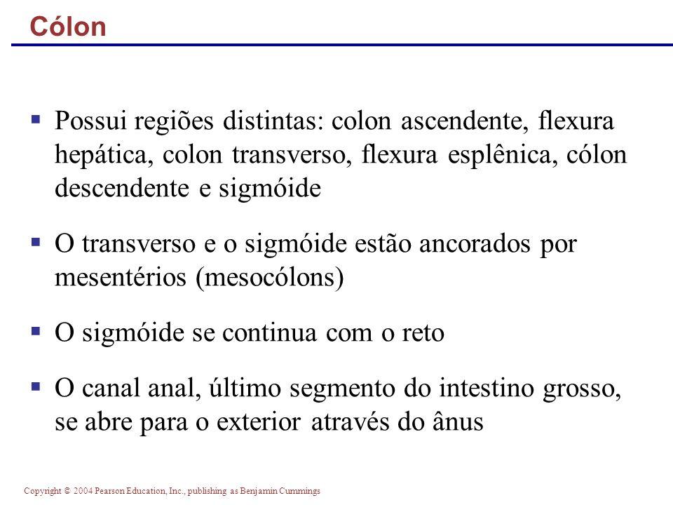 O transverso e o sigmóide estão ancorados por mesentérios (mesocólons)