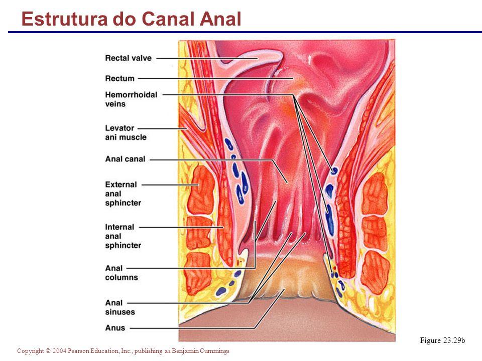 Estrutura do Canal Anal