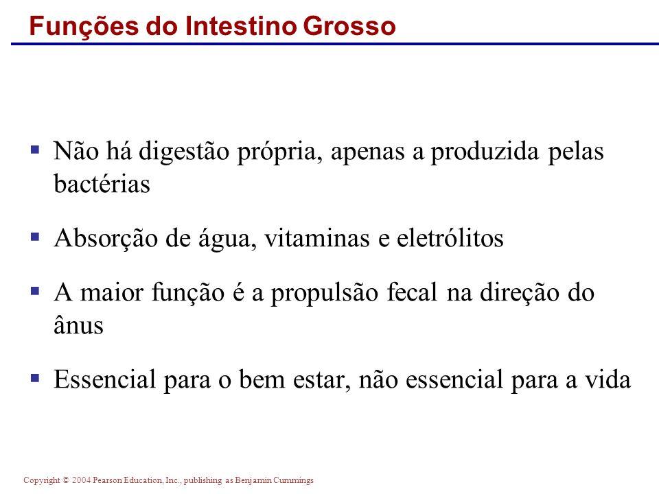 Funções do Intestino Grosso