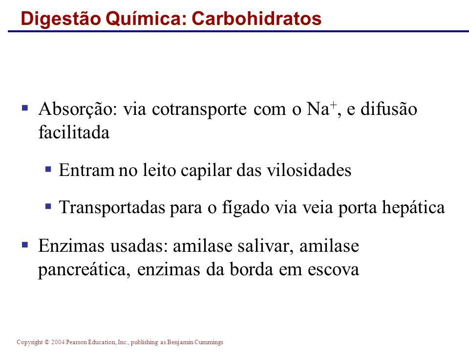 Digestão Química: Carbohidratos