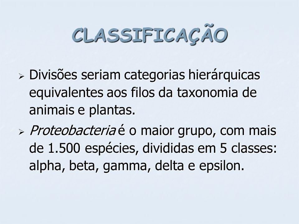 CLASSIFICAÇÃO Divisões seriam categorias hierárquicas equivalentes aos filos da taxonomia de animais e plantas.