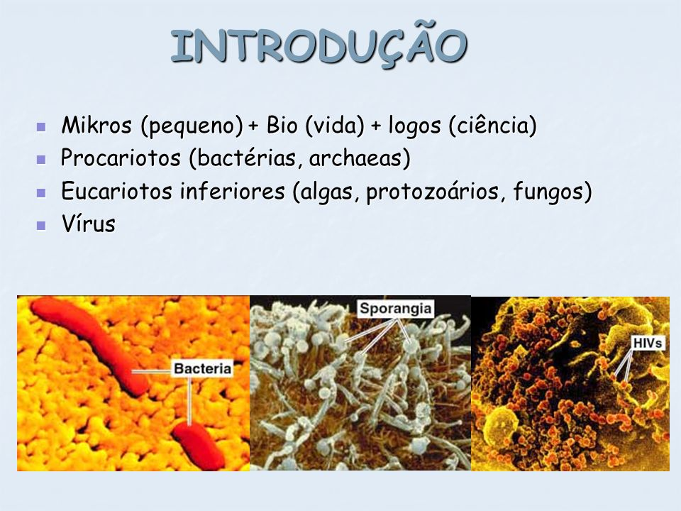 INTRODUÇÃO Mikros (pequeno) + Bio (vida) + logos (ciência)