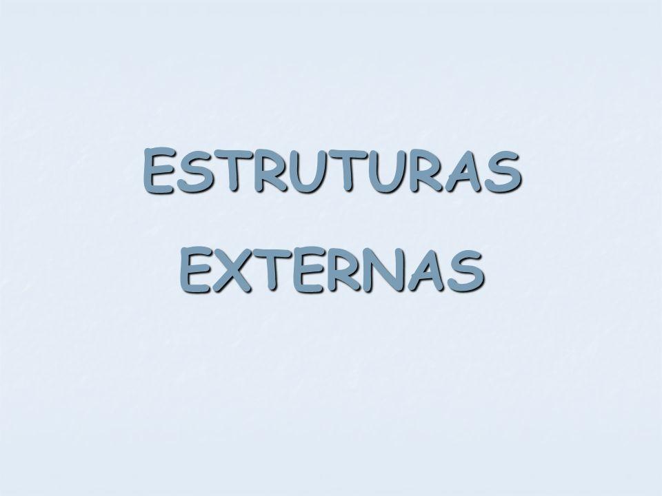 ESTRUTURAS EXTERNAS