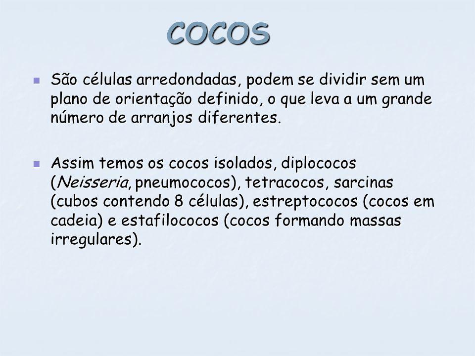 COCOS São células arredondadas, podem se dividir sem um plano de orientação definido, o que leva a um grande número de arranjos diferentes.