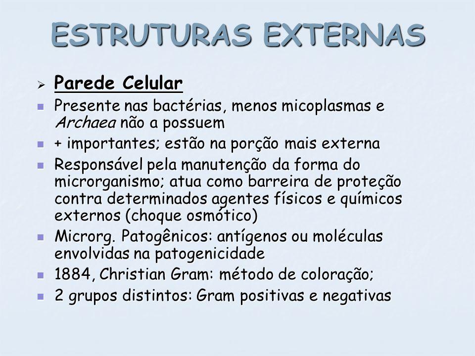 ESTRUTURAS EXTERNAS Parede Celular