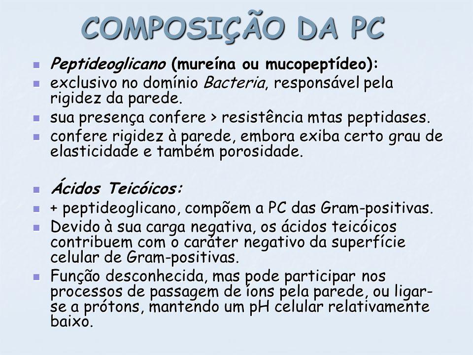 COMPOSIÇÃO DA PC Peptideoglicano (mureína ou mucopeptídeo):