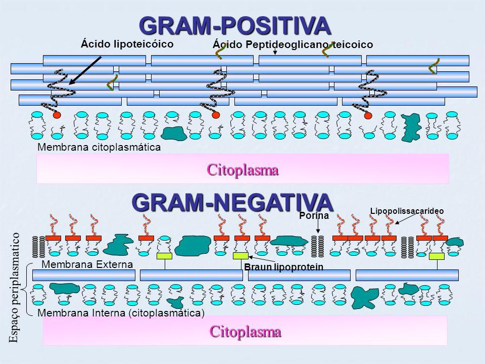 GRAM-POSITIVA GRAM-NEGATIVA