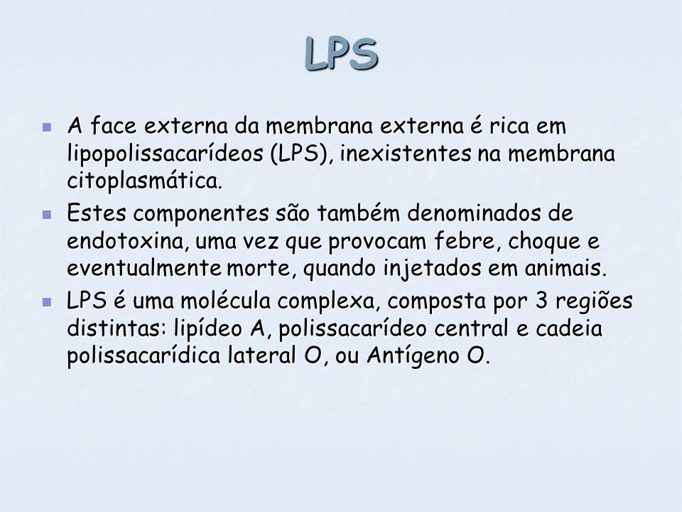 LPS A face externa da membrana externa é rica em lipopolissacarídeos (LPS), inexistentes na membrana citoplasmática.