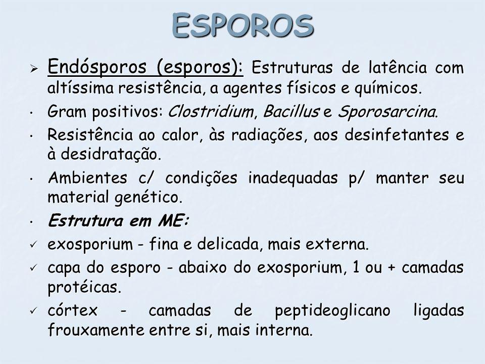 ESPOROS Endósporos (esporos): Estruturas de latência com altíssima resistência, a agentes físicos e químicos.