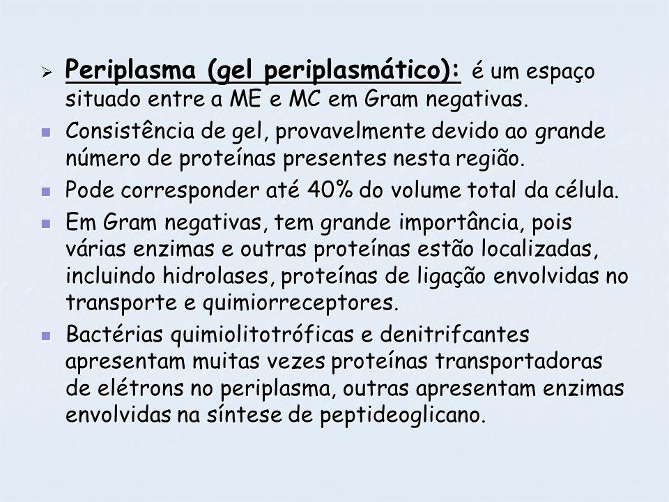 Periplasma (gel periplasmático): é um espaço situado entre a ME e MC em Gram negativas.