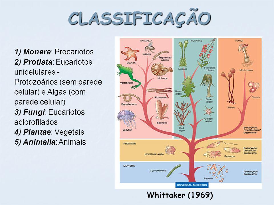 CLASSIFICAÇÃO 1) Monera: Procariotos