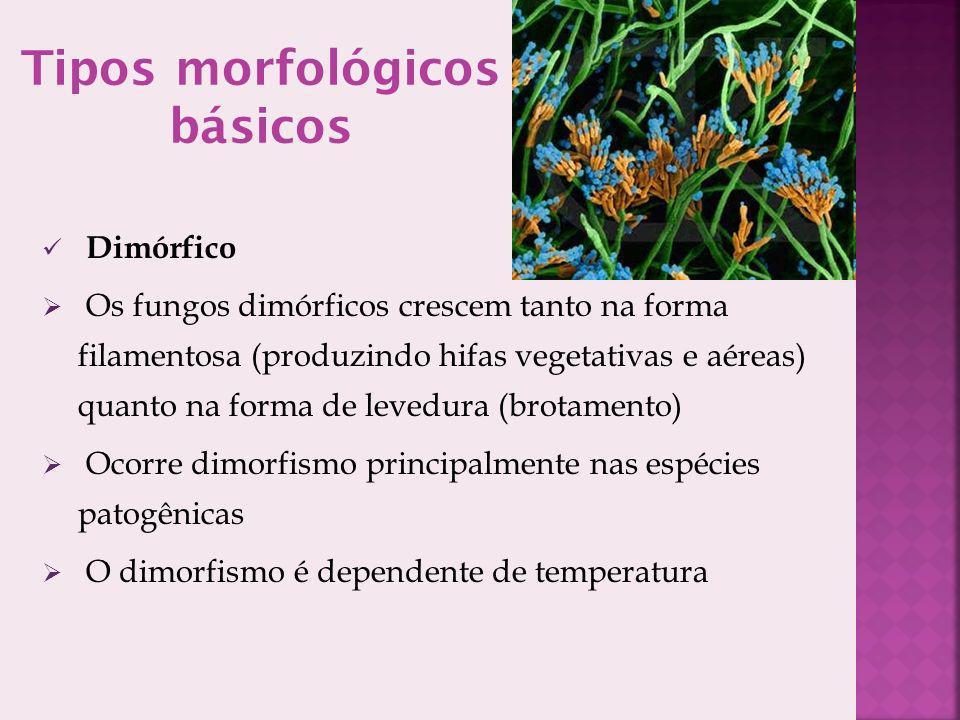Tipos morfológicos básicos