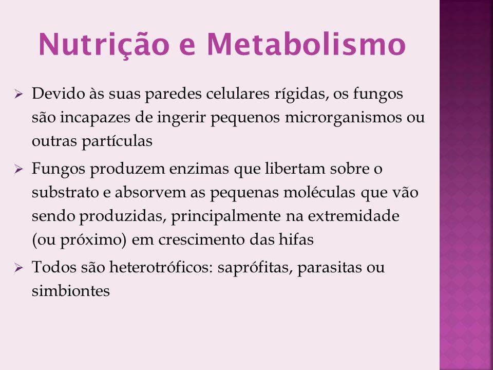 Nutrição e Metabolismo
