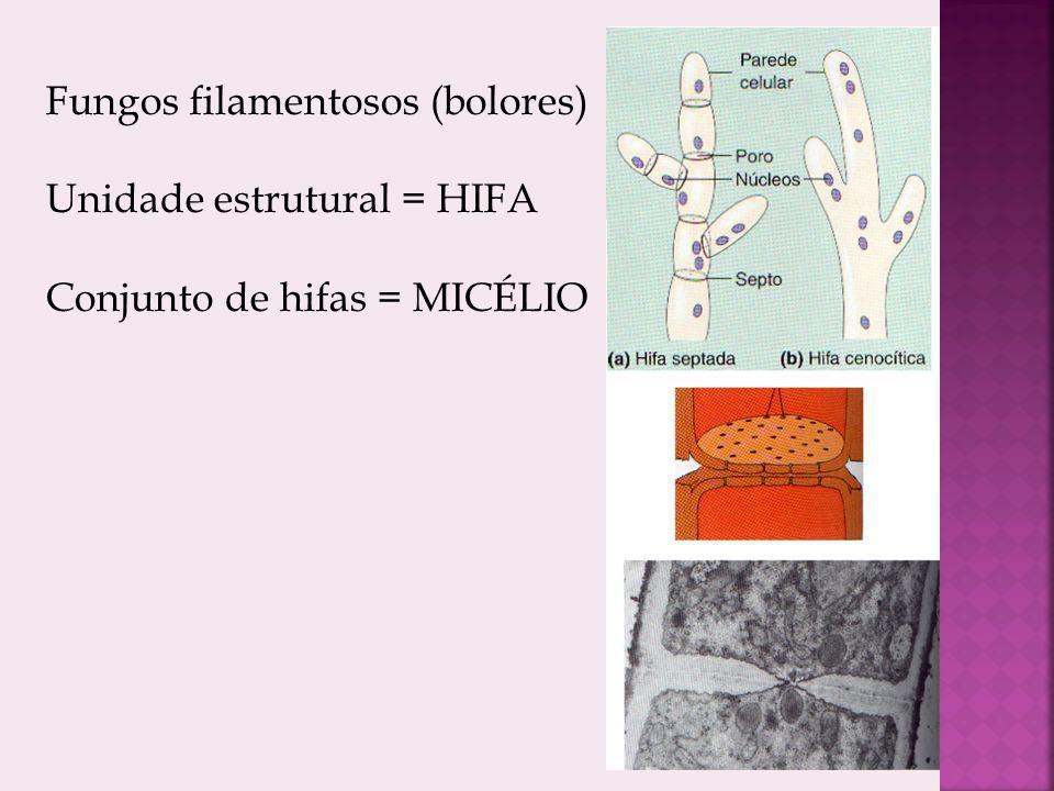 Fungos filamentosos (bolores)