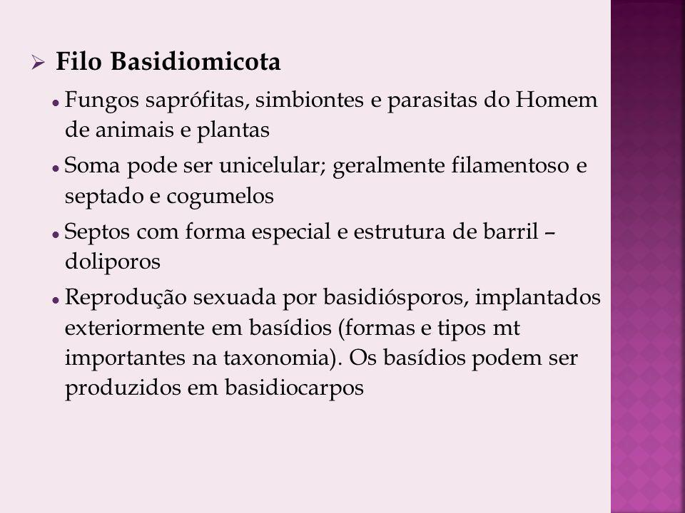 Filo Basidiomicota Fungos saprófitas, simbiontes e parasitas do Homem de animais e plantas.