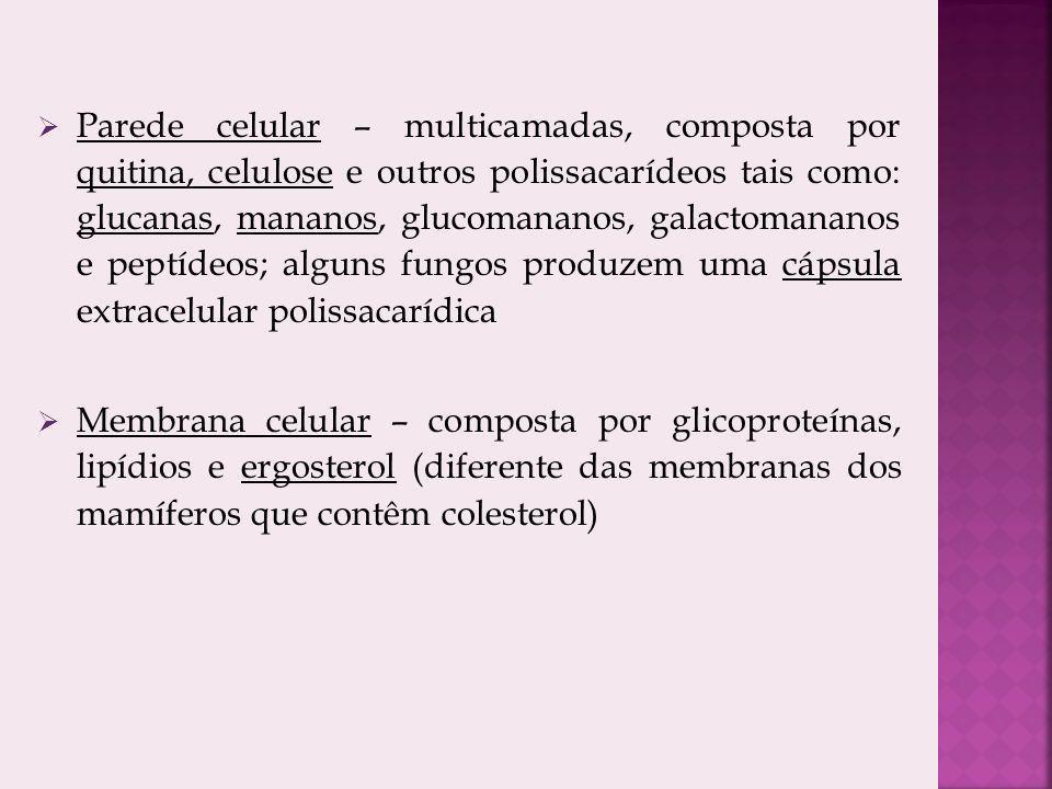 Parede celular – multicamadas, composta por quitina, celulose e outros polissacarídeos tais como: glucanas, mananos, glucomananos, galactomananos e peptídeos; alguns fungos produzem uma cápsula extracelular polissacarídica