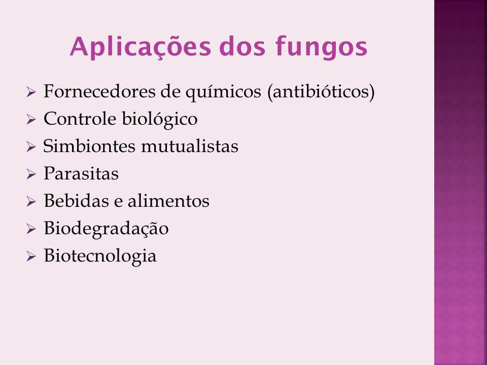 Aplicações dos fungos Fornecedores de químicos (antibióticos)