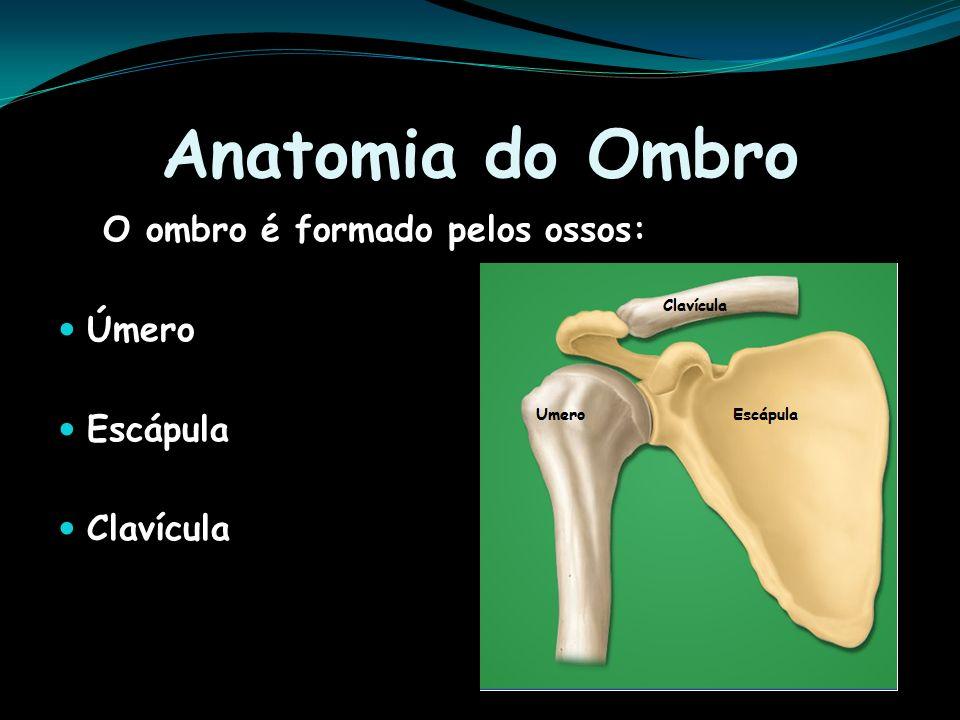 Anatomia do Ombro O ombro é formado pelos ossos: Úmero Escápula