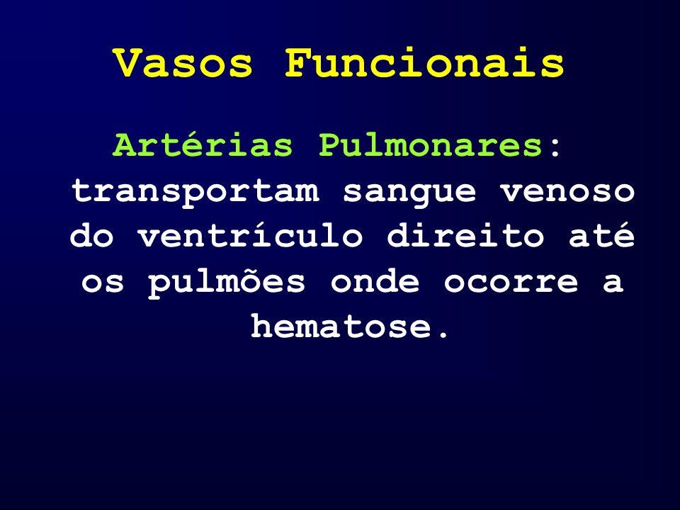 Vasos Funcionais Artérias Pulmonares: transportam sangue venoso do ventrículo direito até os pulmões onde ocorre a hematose.