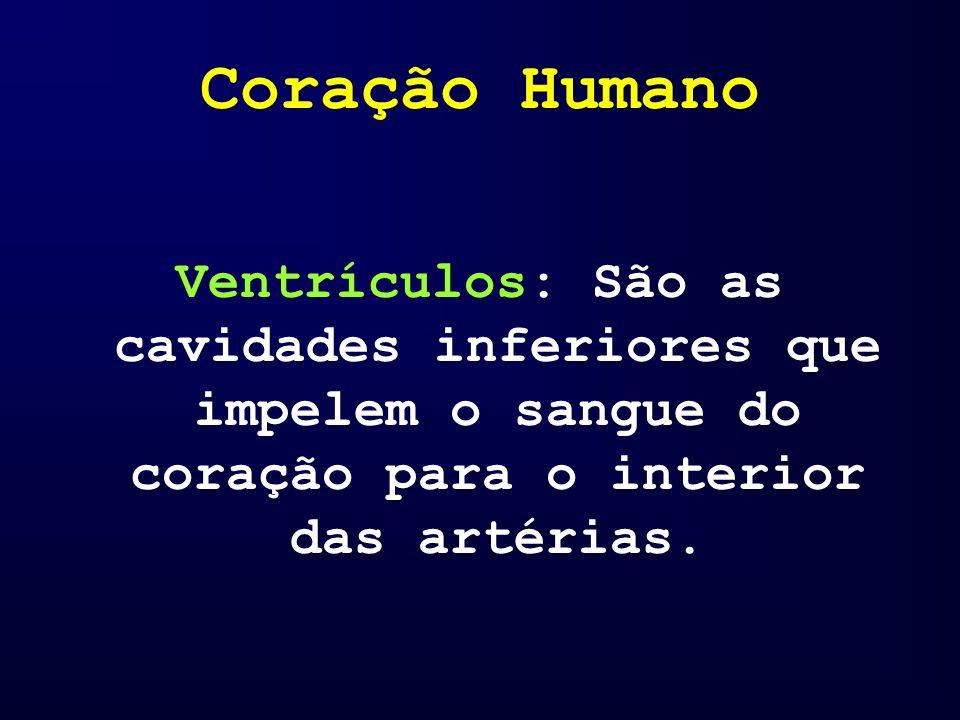 Coração Humano Ventrículos: São as cavidades inferiores que impelem o sangue do coração para o interior das artérias.