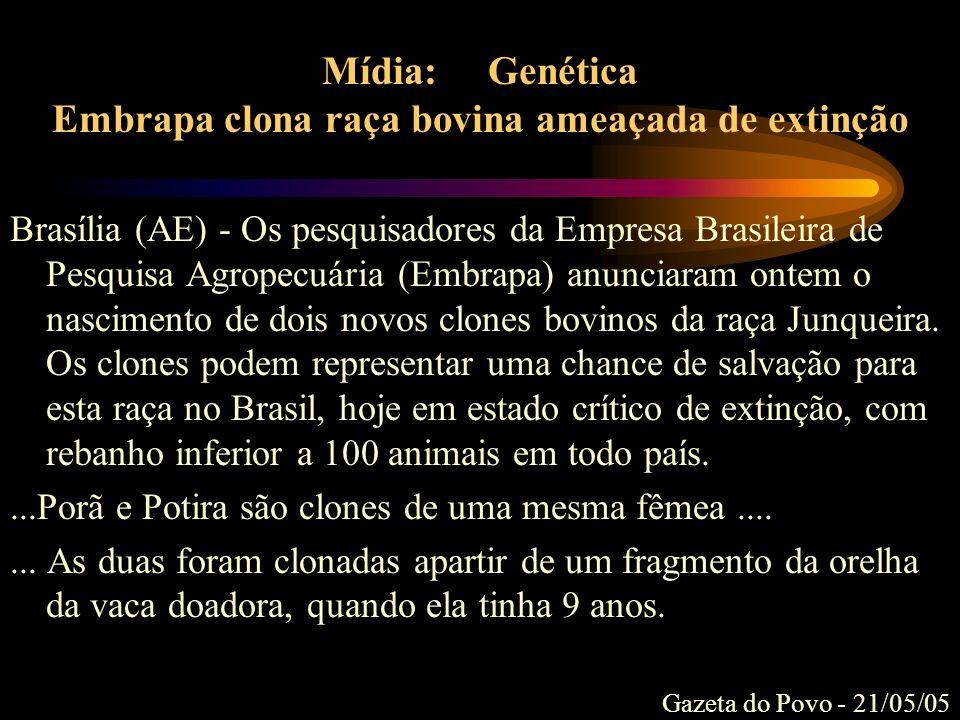 Mídia: Genética Embrapa clona raça bovina ameaçada de extinção