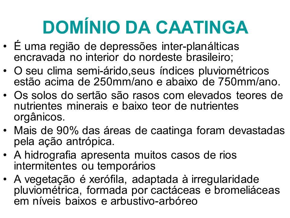 DOMÍNIO DA CAATINGA É uma região de depressões inter-planálticas encravada no interior do nordeste brasileiro;