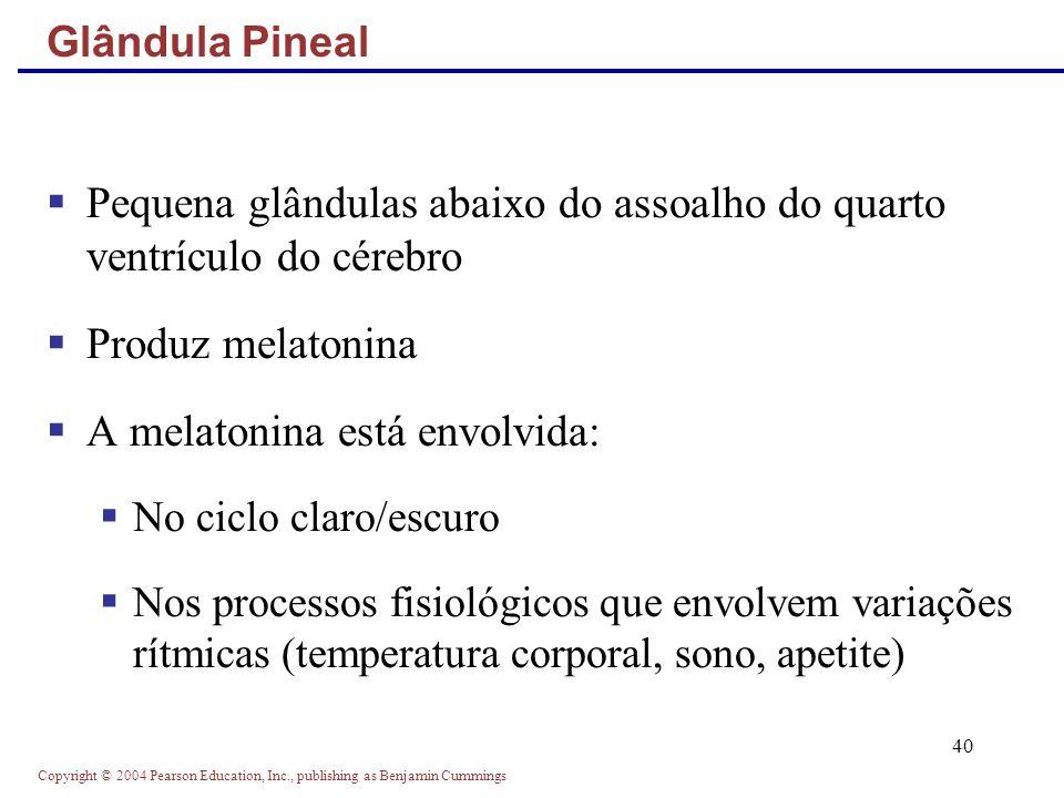 Pequena glândulas abaixo do assoalho do quarto ventrículo do cérebro