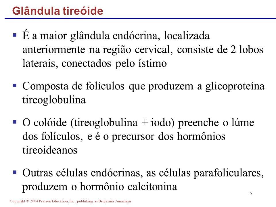 Composta de folículos que produzem a glicoproteína tireoglobulina
