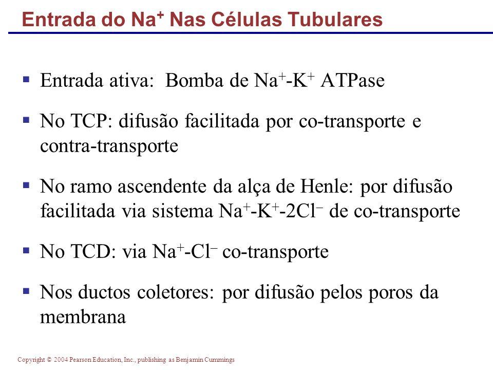 Entrada do Na+ Nas Células Tubulares