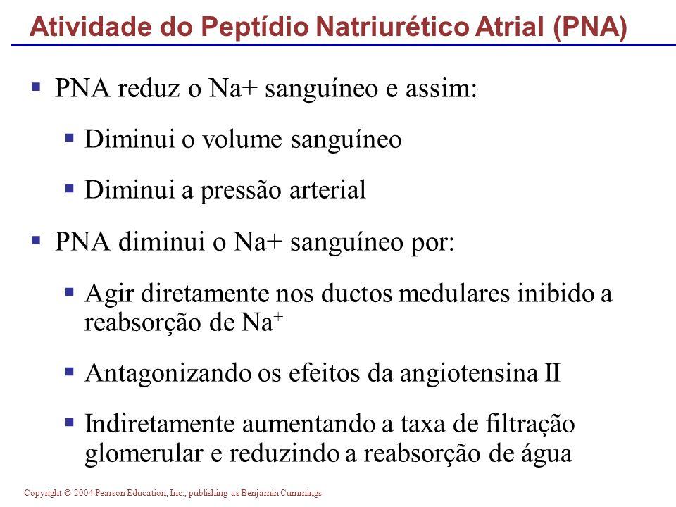 Atividade do Peptídio Natriurético Atrial (PNA)