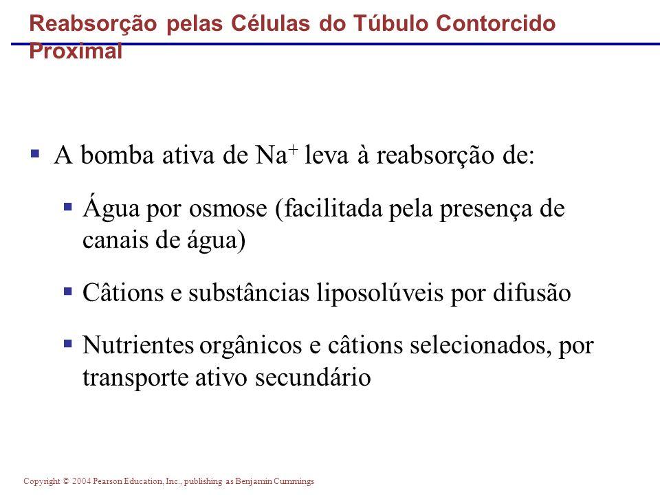 Reabsorção pelas Células do Túbulo Contorcido Proximal