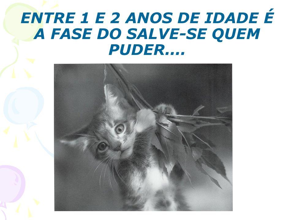 ENTRE 1 E 2 ANOS DE IDADE É A FASE DO SALVE-SE QUEM PUDER....